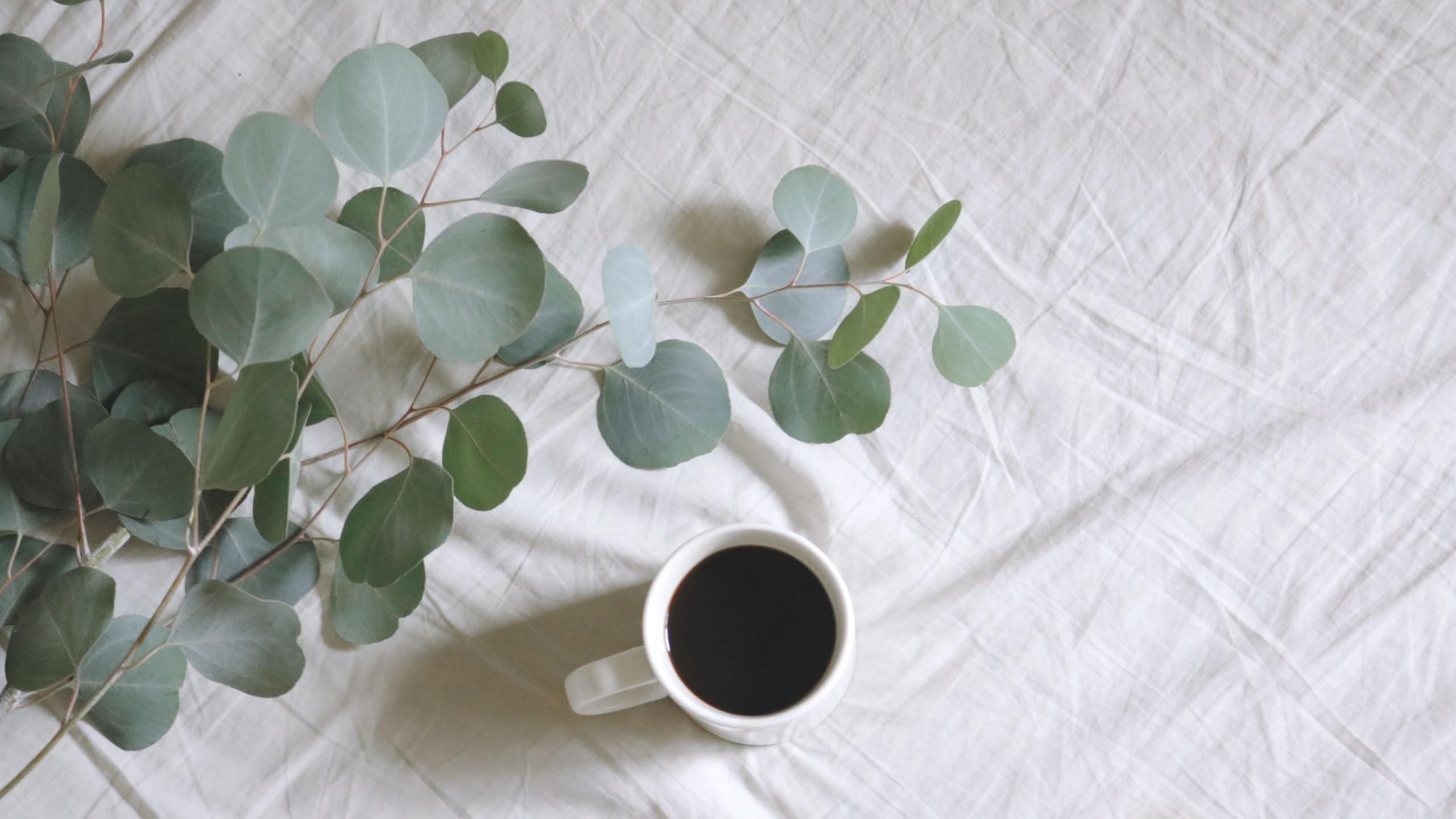 eucalyptus pain relief