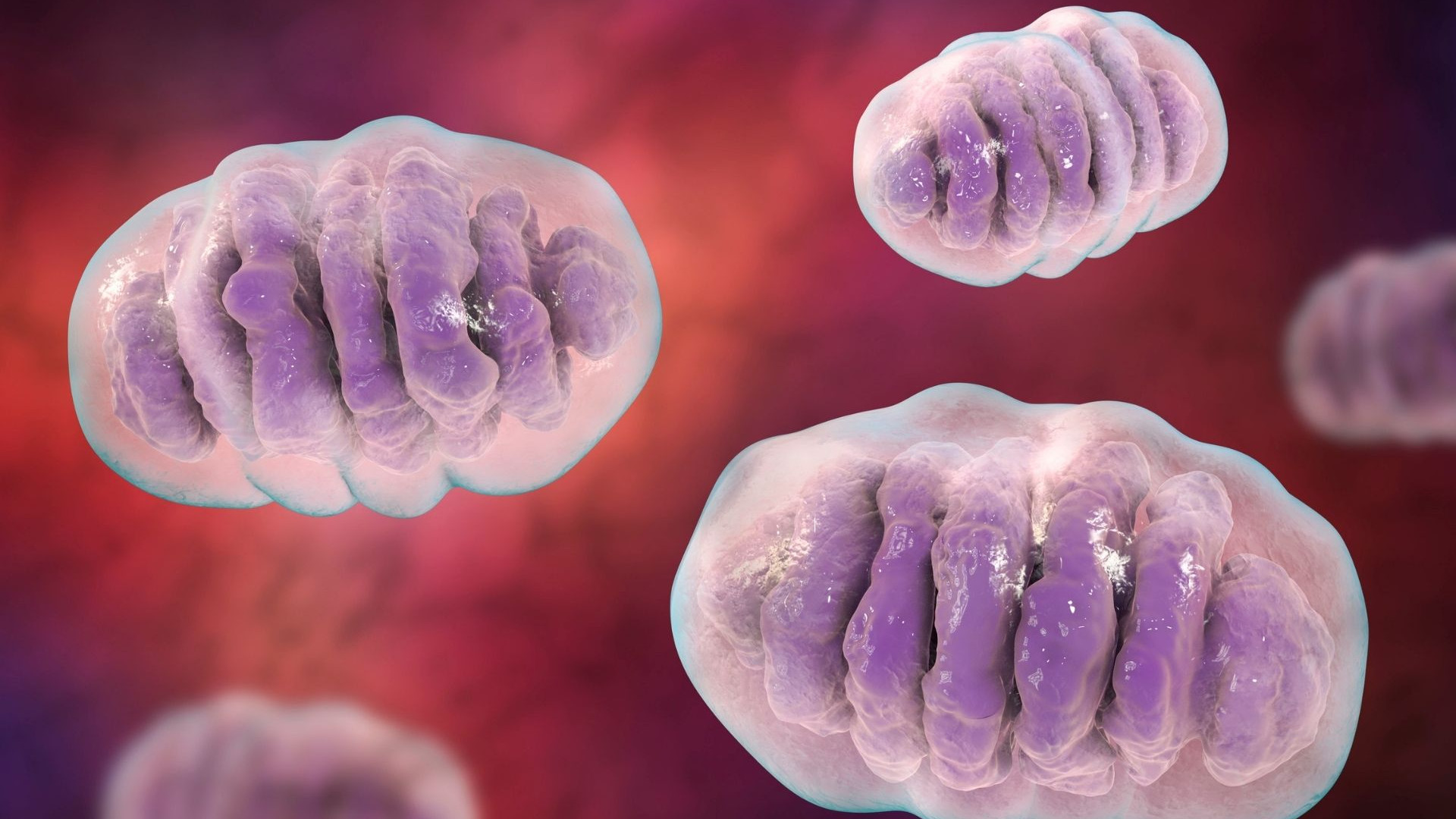 mitochondrial-health-and-energy